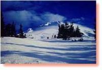 photo of Whispering Woods Resort