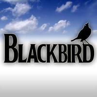 photo of Blackbird