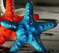 Starfishlarge.full