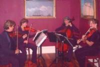photo of Garden Strings