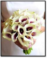 Picasso_mini_calla_lily_bouquet.full