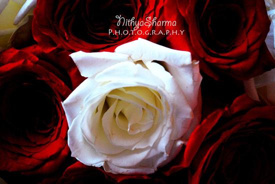 photo of Nithya Sharma Photography
