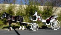 photo of Austin's Die Gelbe Rose Carriage