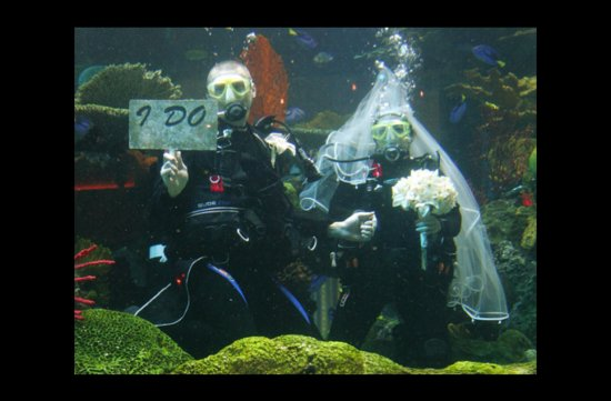 photo of wacky wedding photos weird crazy weddings friday the 13th underwater I Do