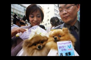 photo of wacky wedding photos weird crazy weddings friday the 13th dogs get hitched