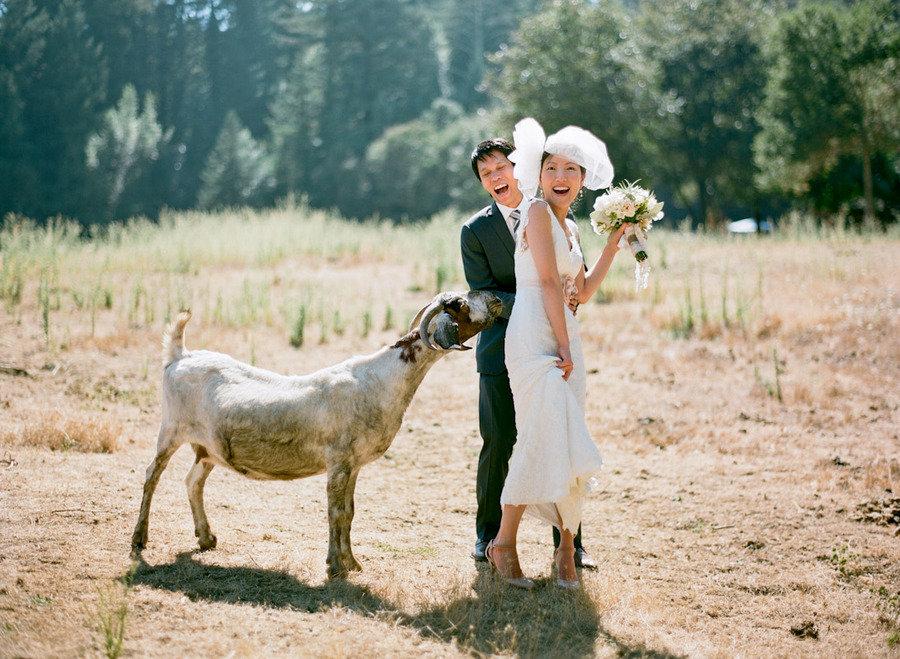 bride groom outside wedding venue animals go wild onewedcom