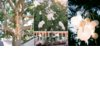 Romantic-outdoor-wedding-chandeliers-white-orchid-centerpieces.square