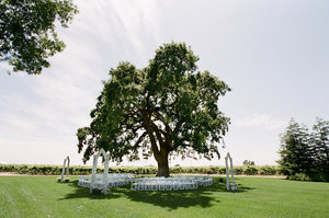 photo of Why Don't You: Get married under a big tree!
