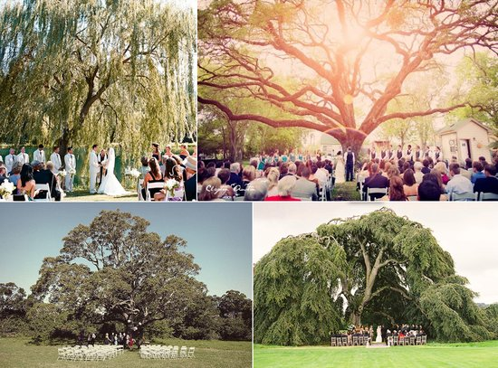 photo of outdoor wedding ideas ceremony under a tree