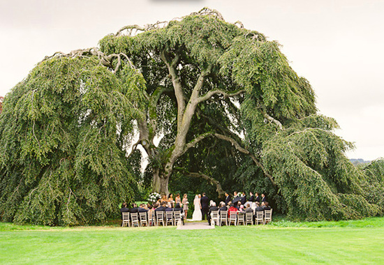 photo of irish wedding under tree from cooper carras via once wed