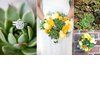 Types-of-succulent-wedding-flowers-eco-friendly-wedding-ideas.square