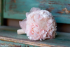 Monochromatic-bridal-bouquet-pale-pink-bouquet-with-no-greenery.square