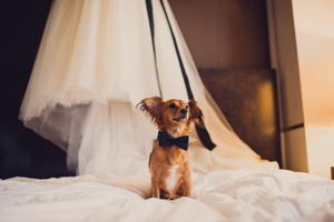 photo of From the Engagement to the Honeymoon—What Means Most to Your Groom