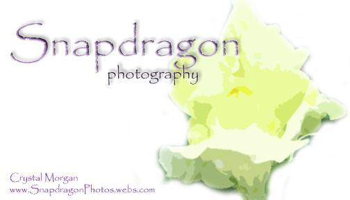 photo of Snapdragon Photography