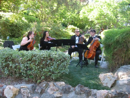 photo of Organic String Quartet