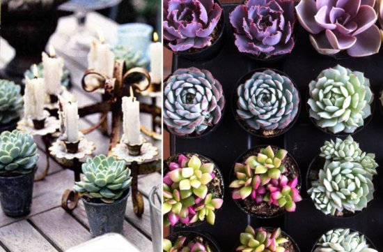 eco friendly wedding ideas succulent centerpieces
