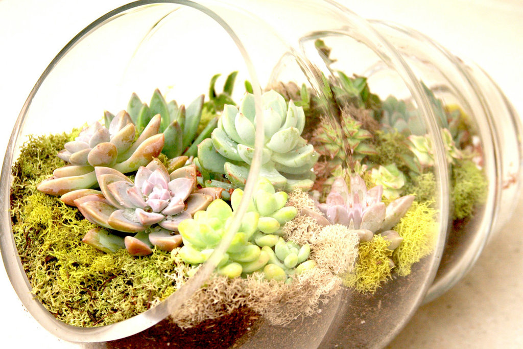 Simple-wedding-centerpieces-for-a-handcrafted-wedding-glass-shell-terrarium.full