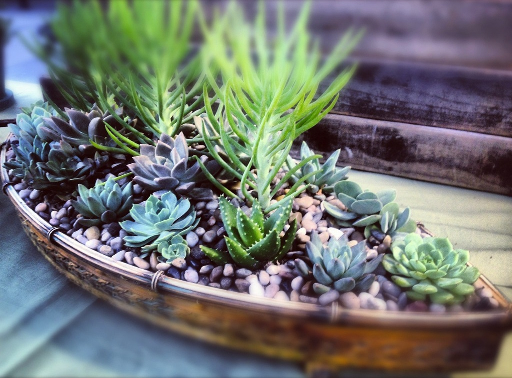Simple-wedding-centerpieces-for-a-handcrafted-wedding-succulent-sailboat.full