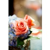 Elegant-real-wedding-with-simple-diy-details-centerpieces-coral-roses.square