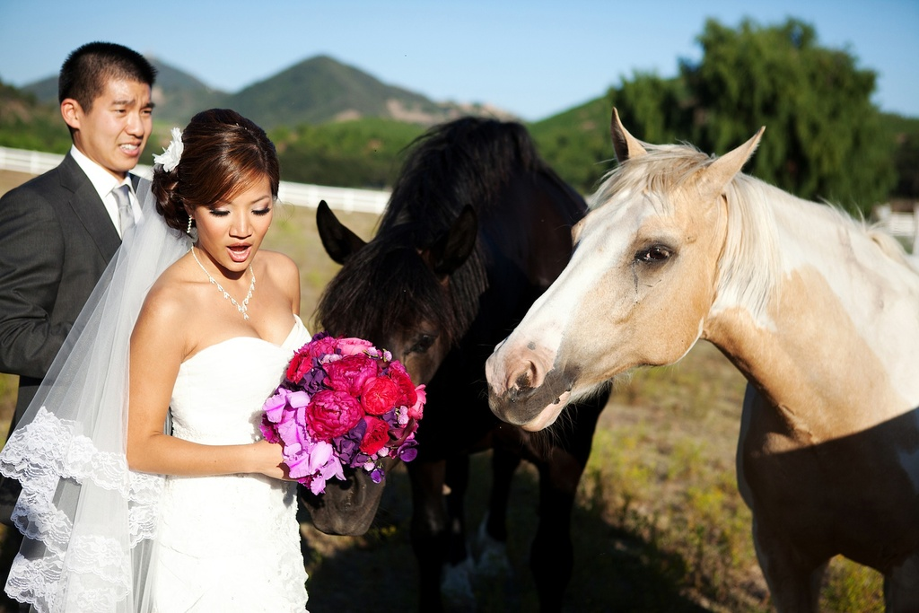 Bride-groom-get-friendly-with-horses-california-wedding.full