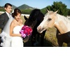 Bride-groom-get-friendly-with-horses-california-wedding.square