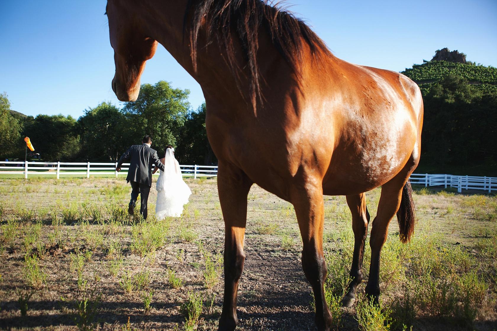 Elegant Malibu Wedding Bride Groom Portrait With Horses