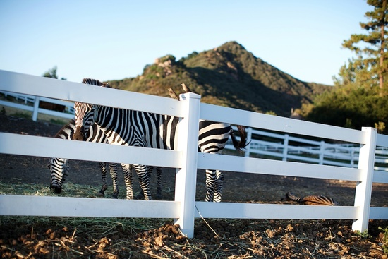 wild animals at real weddings California outdoor wedding
