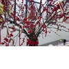 Winter-wedding-centerpiece-manzanita-branches-red-berries-candy-canes.square