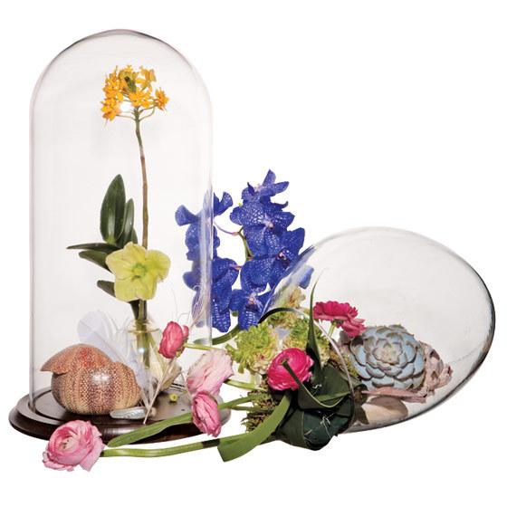 Unique-wedding-centerpiece-epidendrum-orchids-vanda-orchids-hellebores-ranunculus-echeveria-preserved-butterfly-sea-urchin-sea-barnacle-seashells.full