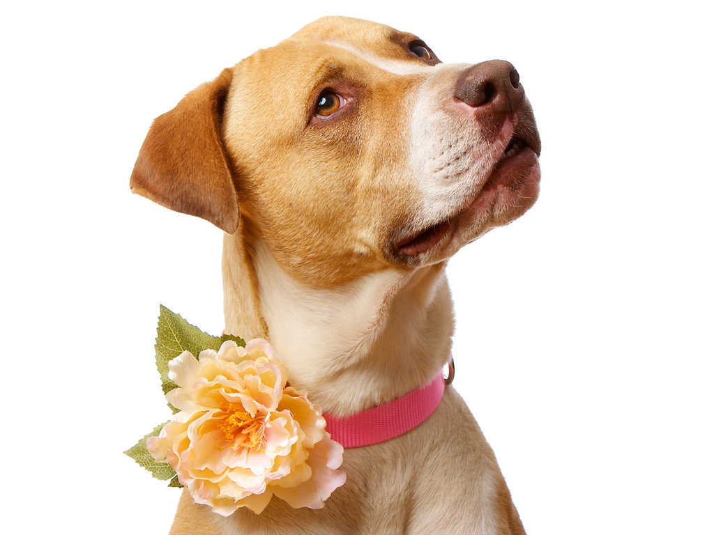 Dogs-at-weddings-floral-collar.full