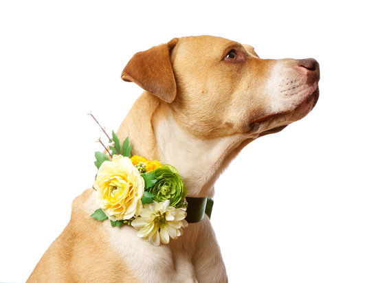yellow green wedding flowers pets at weddings floral dog collar