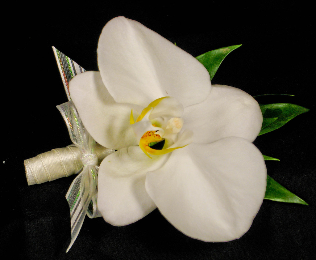 White_20phal_20corsage.original.full