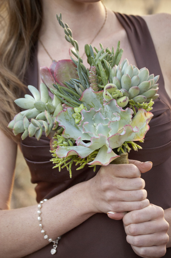 photo of Succulent by Design