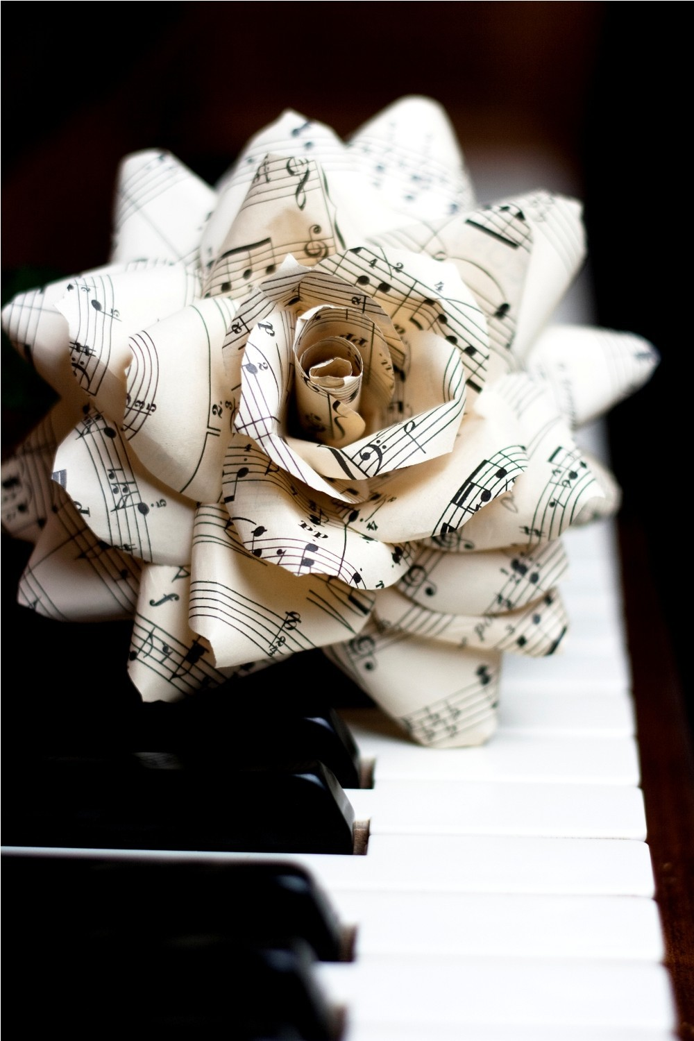Buttercream-and-black-wedding-colors-elegant-weddings-sheet-music-rose.full
