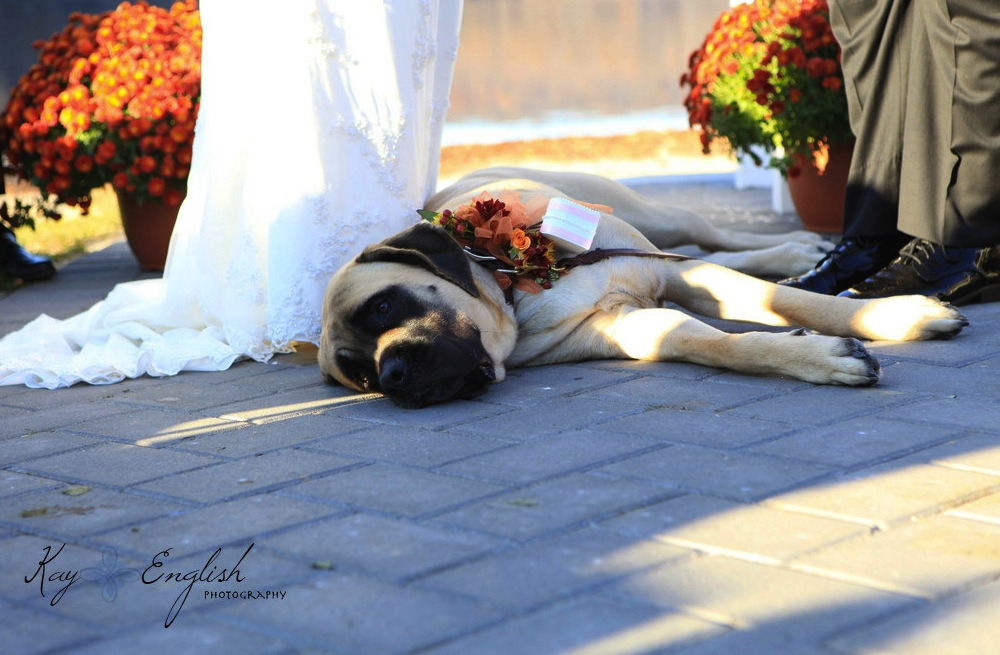 Handmade-wedding-finds-for-fall-weddings-pup-ring-bearer-corsage.original