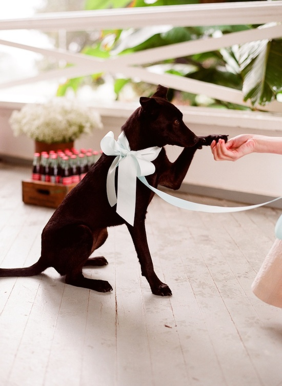 romantic wedding details outdoor weddings ring bearer puppy