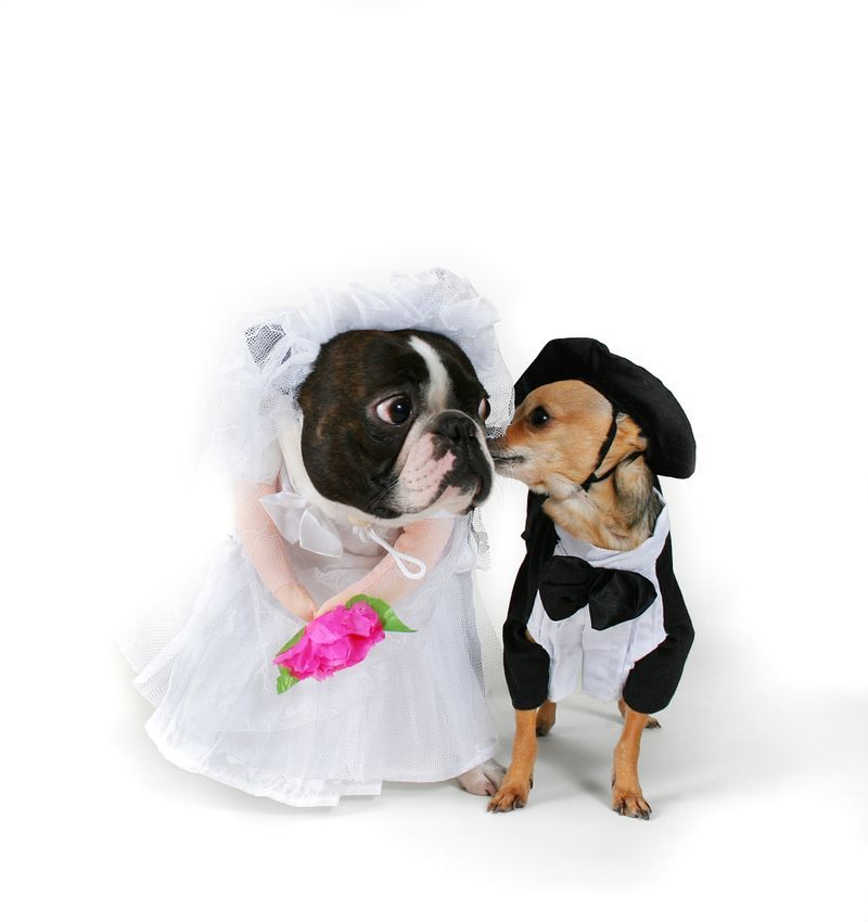 Priceless-wedding-photos-escape-from-wedding-planning-stress-unforgettable-ring-bearers-pups-dressed-up.full
