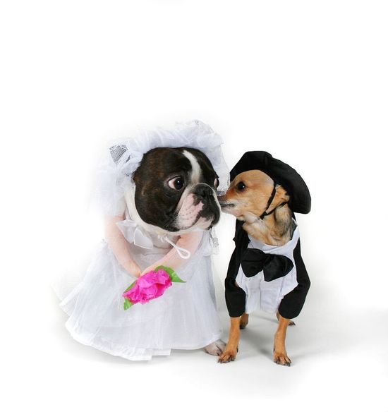 photo of priceless wedding photos escape from wedding planning stress Unforgettable Ring Bearers pups dressed