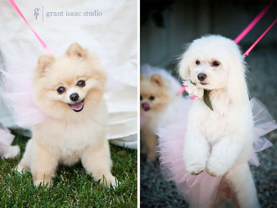 photo of funny wedding photos escape from wedding planning stress Unforgettable Ring Bearers pups