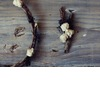 Unique-boutonnieres-for-grooms-handmade-weddings-by-etsy-rustic-elegance.square
