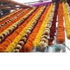 Marigold-wedding-inspiration-ornate-indian-wedding.square