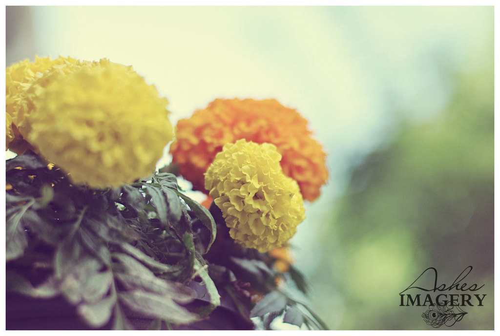 Wedding-color-inspiration-for-brides-from-etsy-weddings-marigold-flowers.full