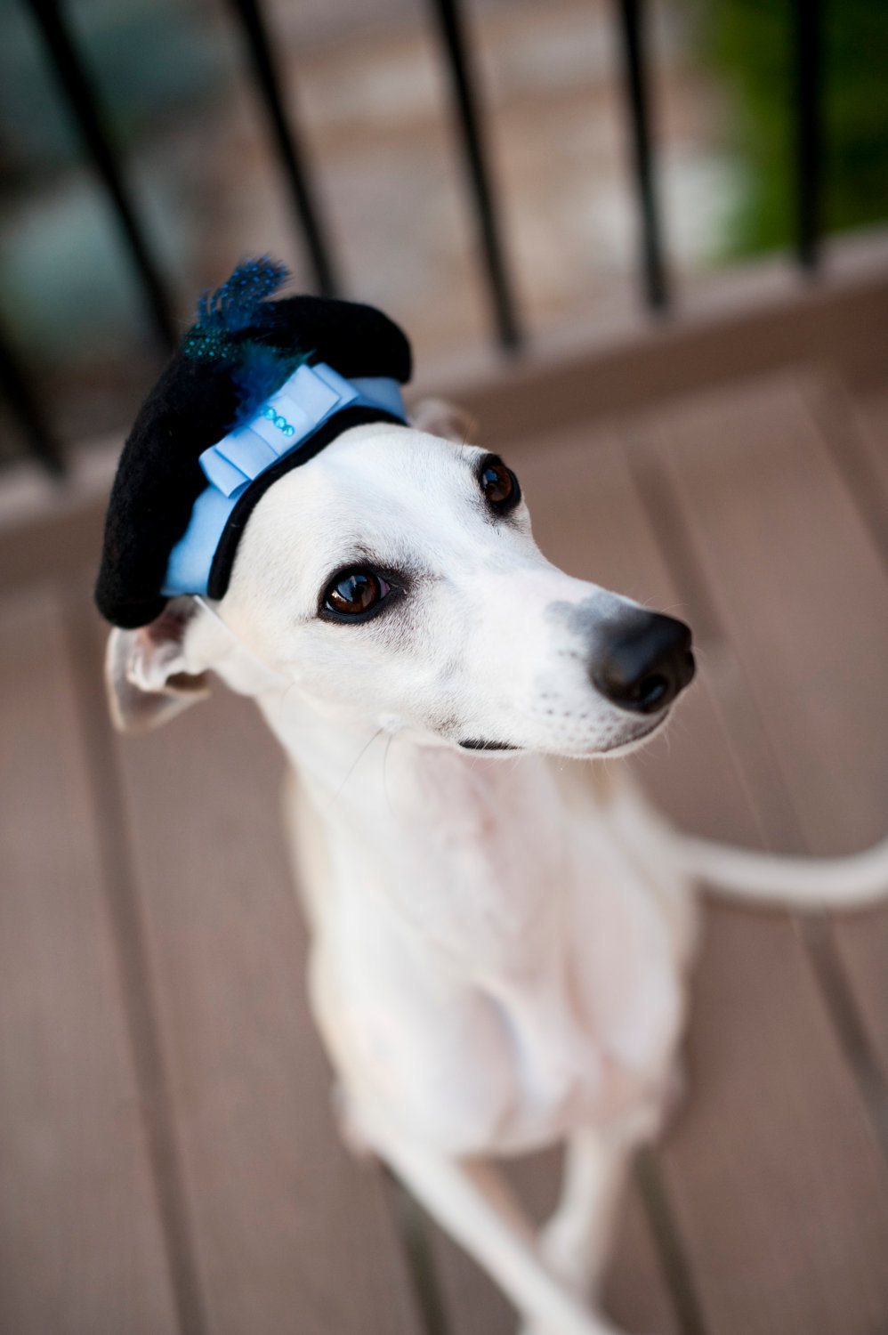 adorable wedding attire accessories for the little ones in the wedding dogs embellished beret