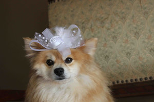 photo of 20 Dapper Wedding Accessories for Your Dog