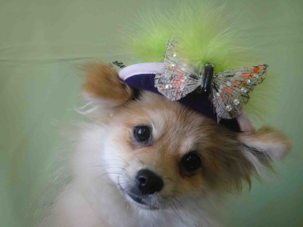 adorable wedding attire accessories for the little ones in the wedding dogs hat