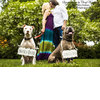 Dapper-wedding-accessories-for-your-dog-save-the-date-signs.square