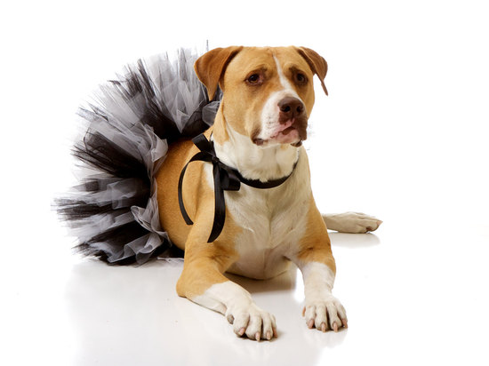 adorable wedding attire accessories for the little ones in the wedding dogs black white tulle tutu