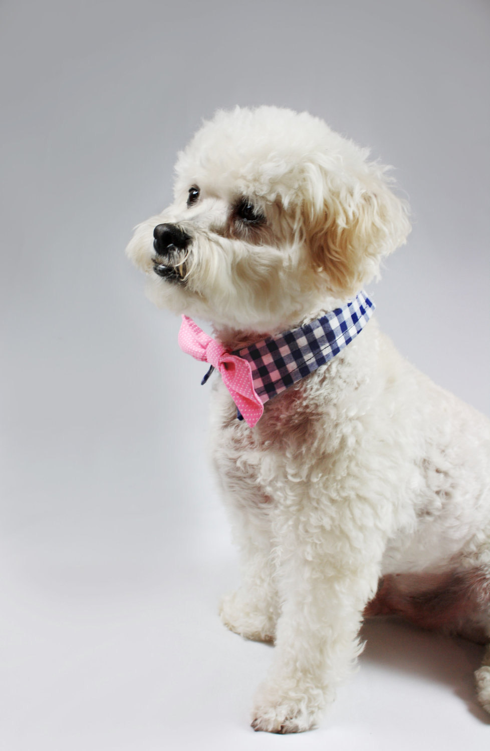 Adorable-wedding-attire-accessories-for-the-little-ones-in-the-wedding-dogs-bow-tie-pink-bow-tie-checkered-collar.full