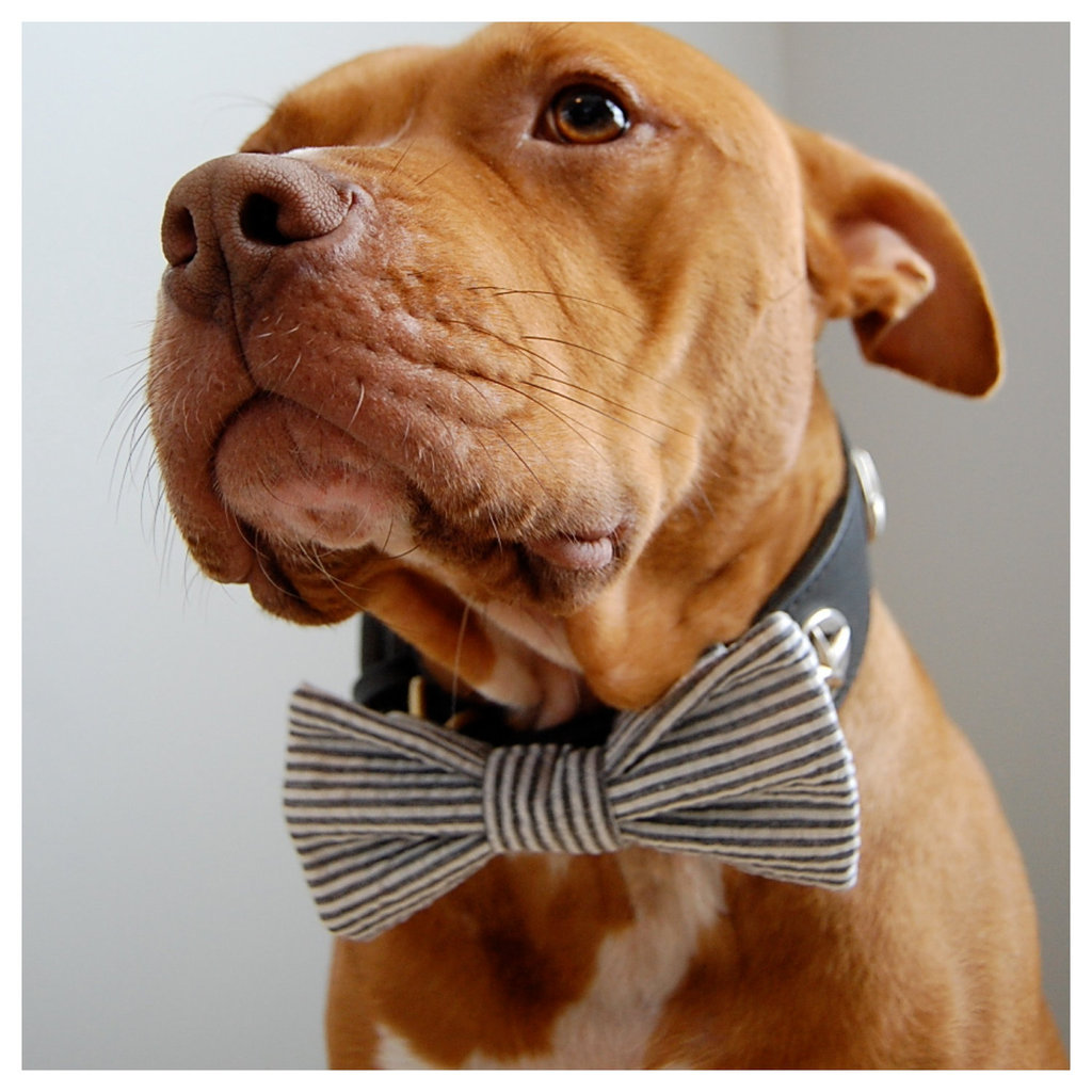 Adorable-wedding-attire-accessories-for-the-little-ones-in-the-wedding-dogs-bow-tie-seersucker.full