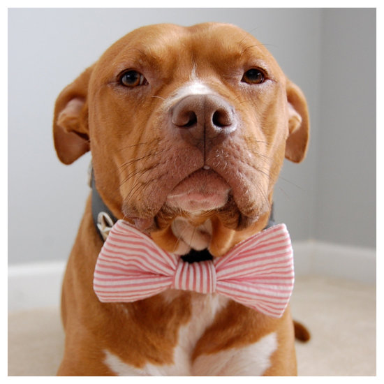 adorable wedding attire accessories for the little ones in the wedding dogs bow tie 1